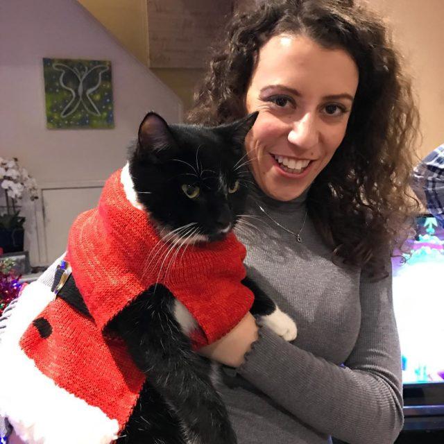 Oli not happy christmascat tuxedocat dressedupcat xmascats2016 xmascat cutecat olicathellip