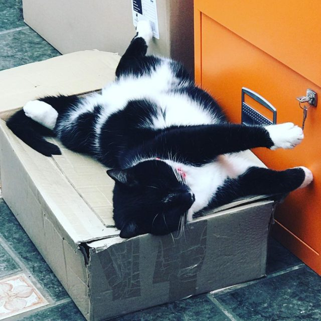 Oli and his many sleeping positions He prefers this boxhellip